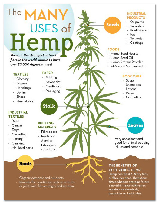 CHF_Hemp_Infographic_web